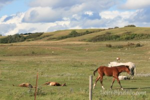 North Dakota, Turtle Mountain, horses