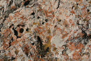 Arikaree Formation, wormy marker bed, North Dakota, geology, Killdeers